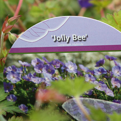 jolly bee